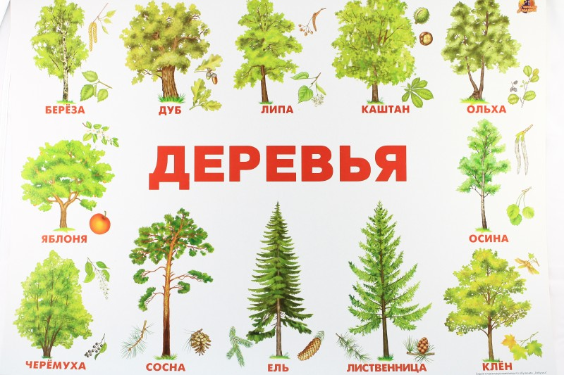 Все деревья список с картинками